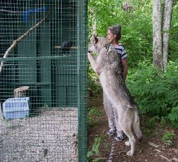 Abe the Raven meets Cree the Wolf