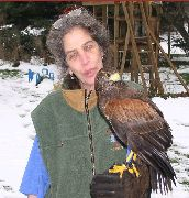 Wendy with Harris Hawk